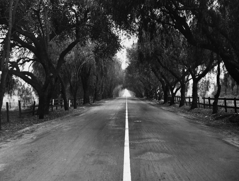 View-White-Oak-Avenue-later-Foothill-with-Pepper-Trees-Planted-By-Lucky-Baldwin-and-cut-down-in-1931.jpg