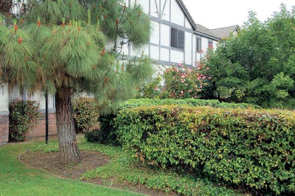 1814_8th_grounds.jpg