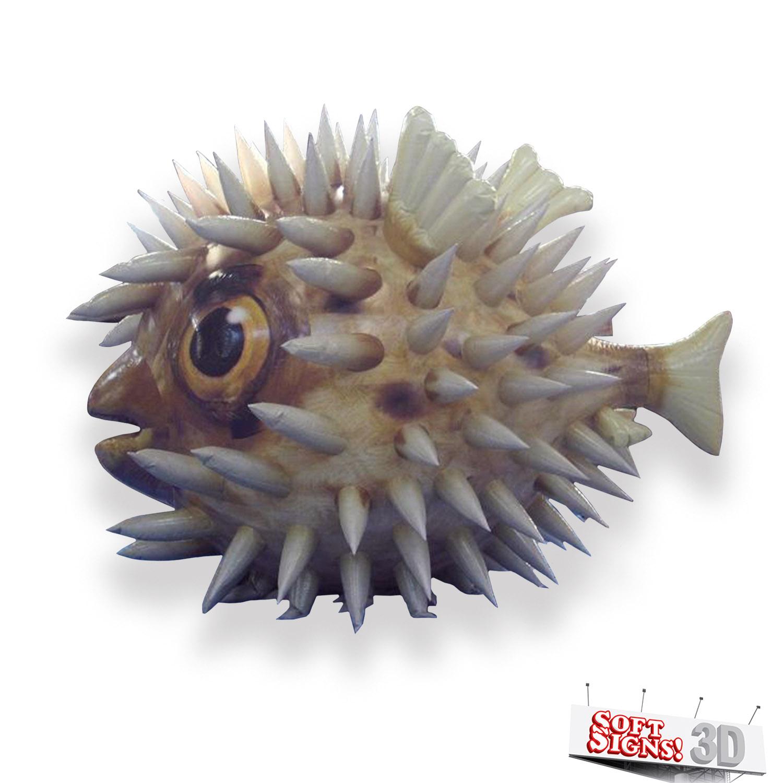 Florida Aquarium Puffer Fish