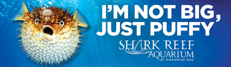 SharkReef PufferFish Creative