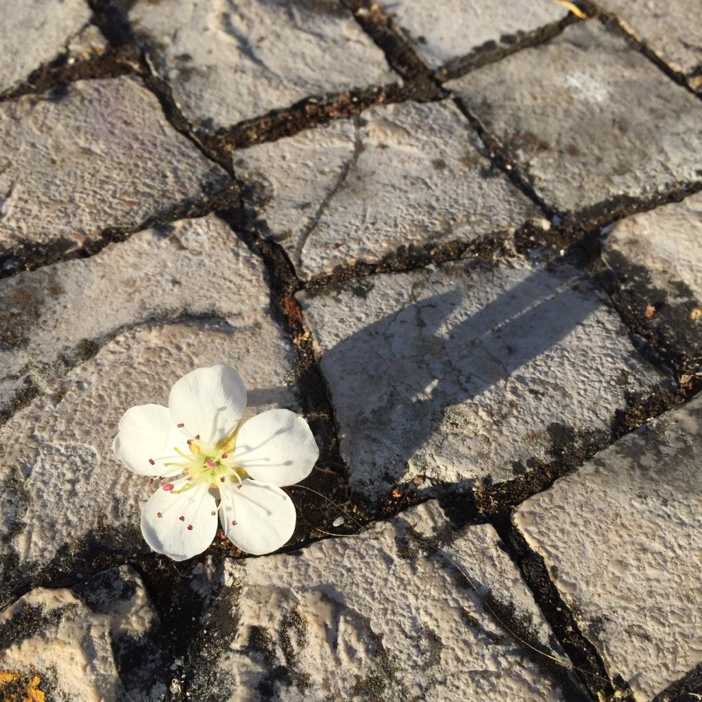 Pedra e Flor. Metal e Madeira. Uma combinação equilibrada.