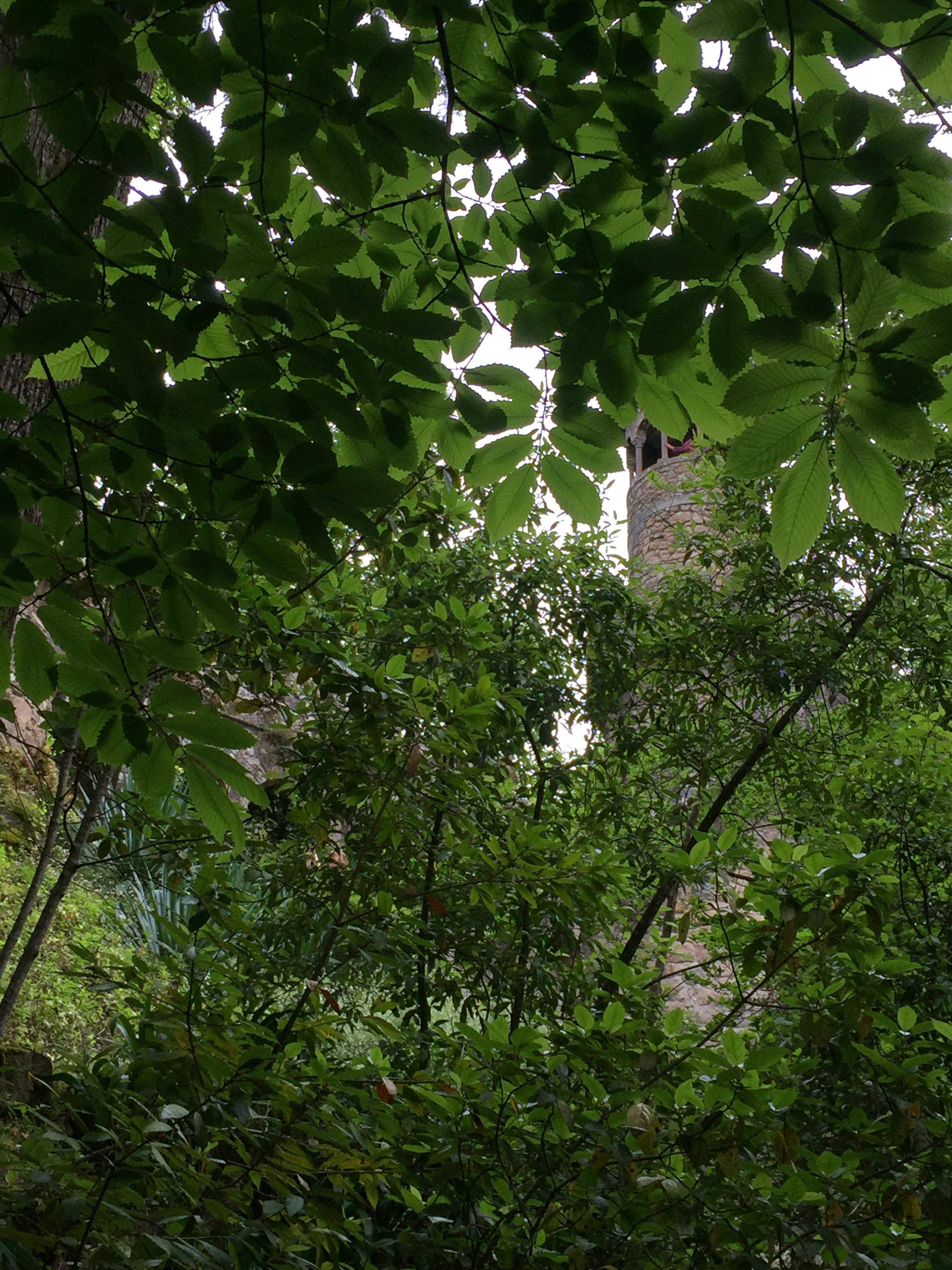 """A torre da Regaleira, a """"montanha"""" mais alta,envolta pelo jardim."""