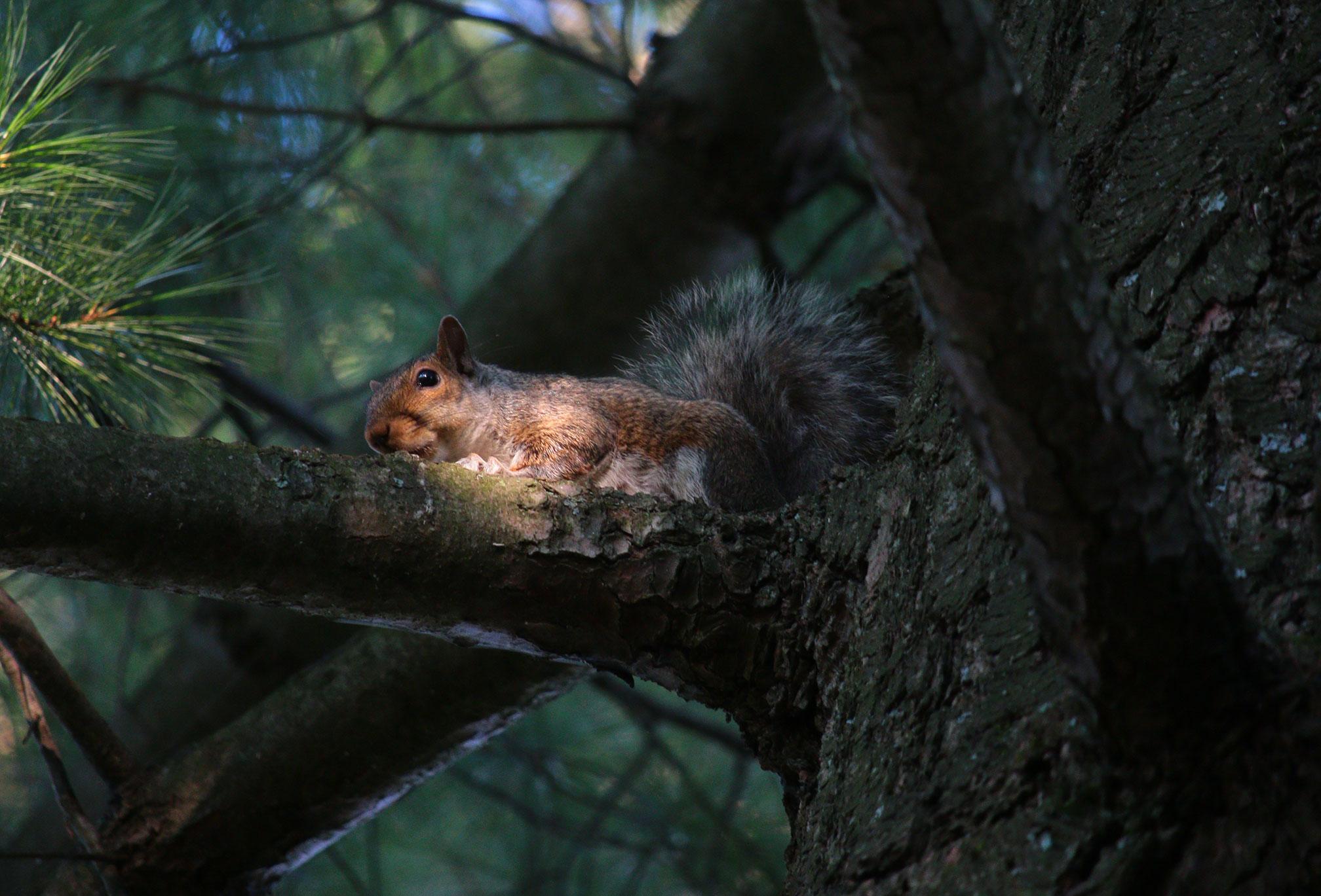 squirrel_4709.jpg