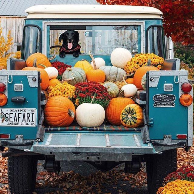 Goodbye September, hello #pumpkinspice season #fall @todayscreativelife