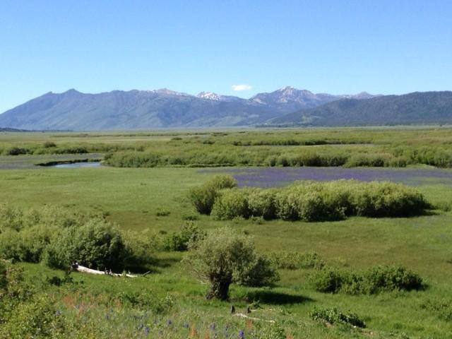 Nez Perce.jpg