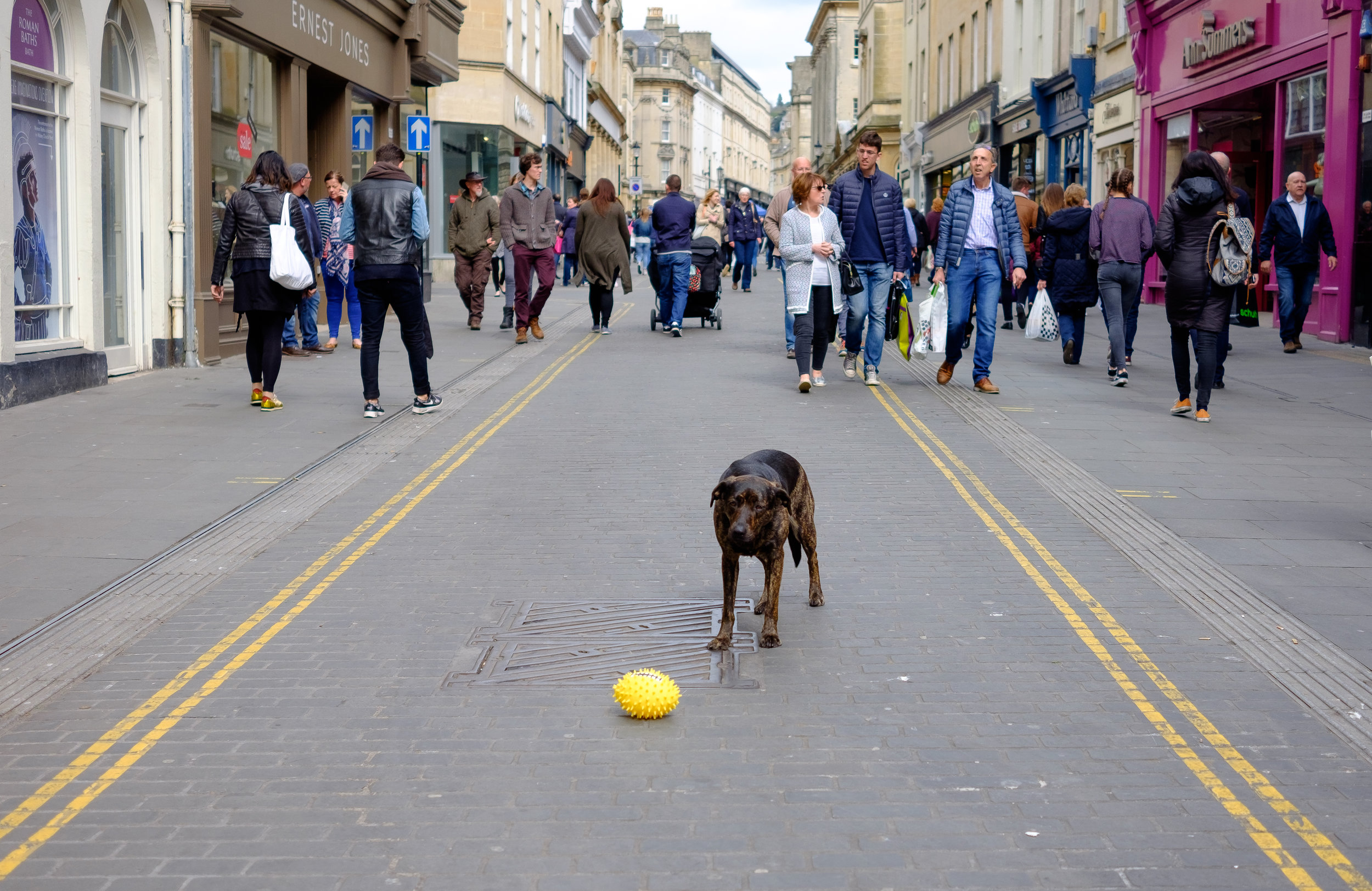 Easter egg for dogs?! (Central Bath)