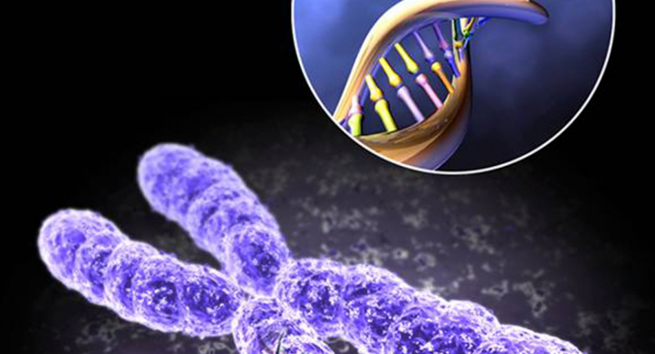 Telomeres-and-Ongoing-Cancer-Research.png
