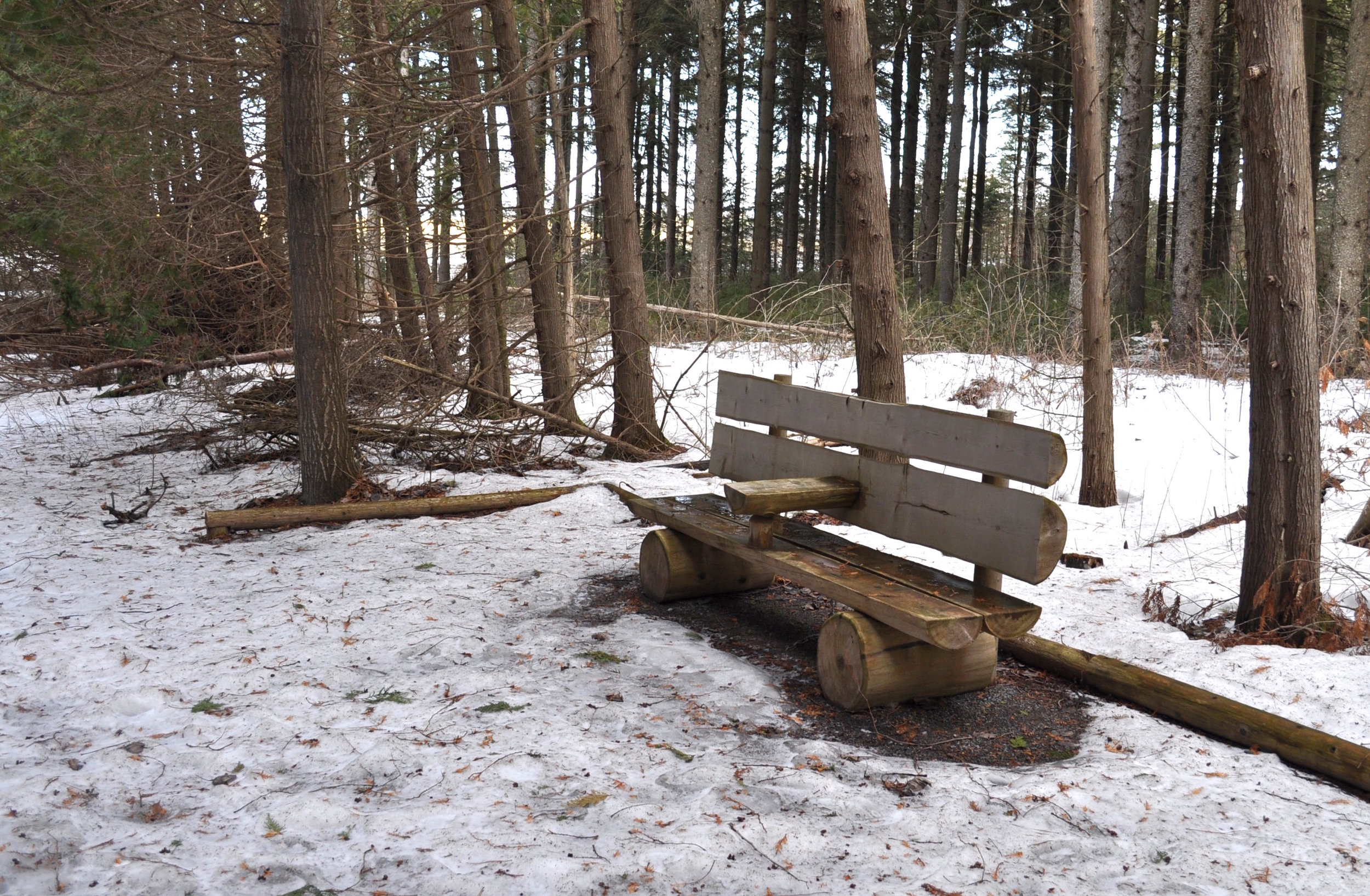 One of the many benches placed throughout the trails.
