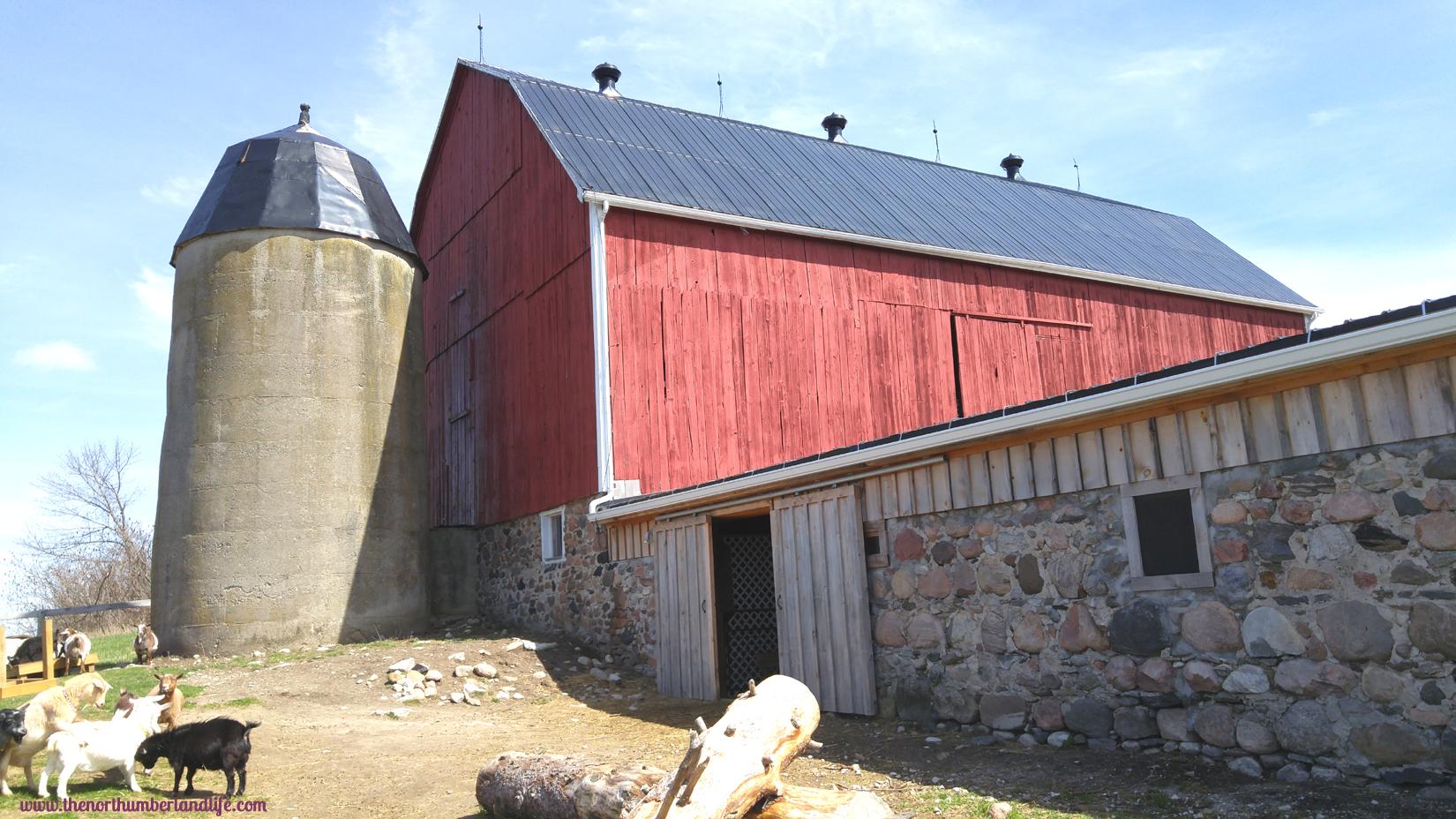 The goat barn at Haute Goat.