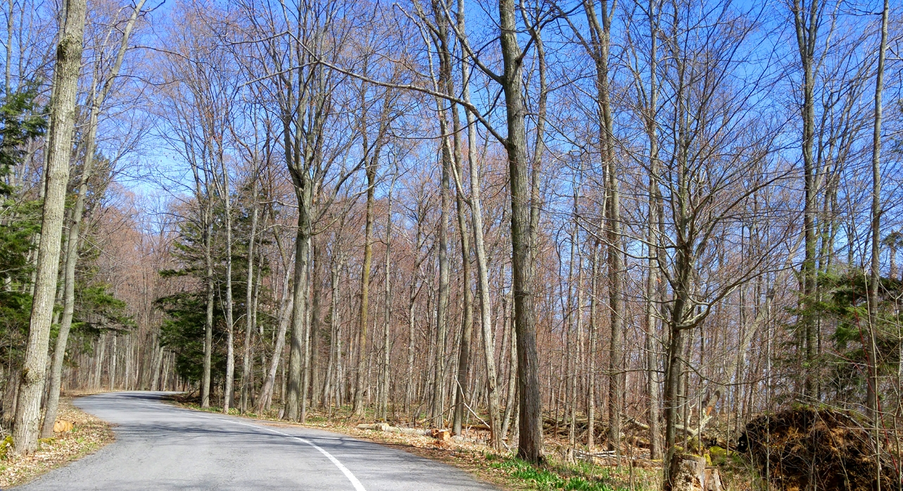 One of the roads through the forest at Presqu'ile.