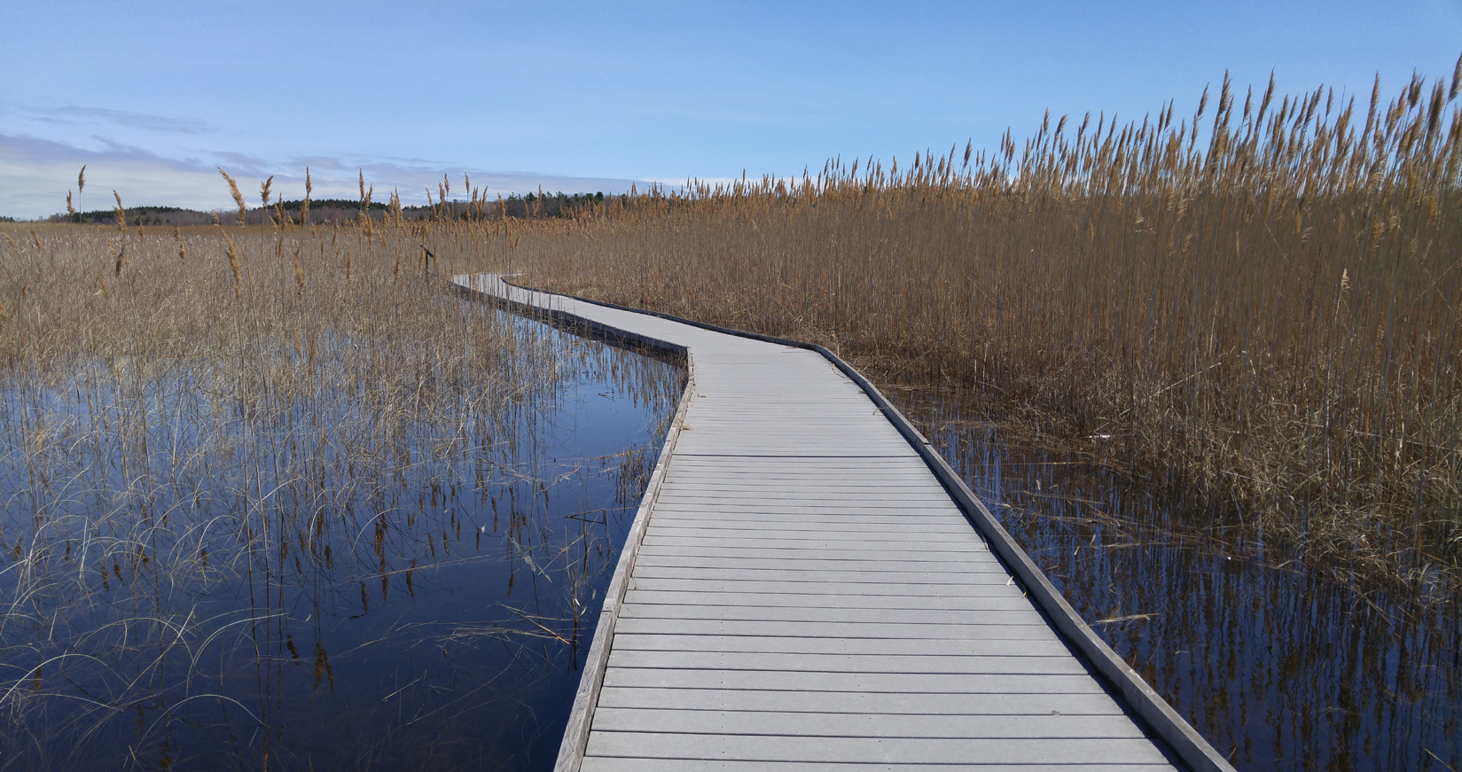 The Marsh Boardwalk.