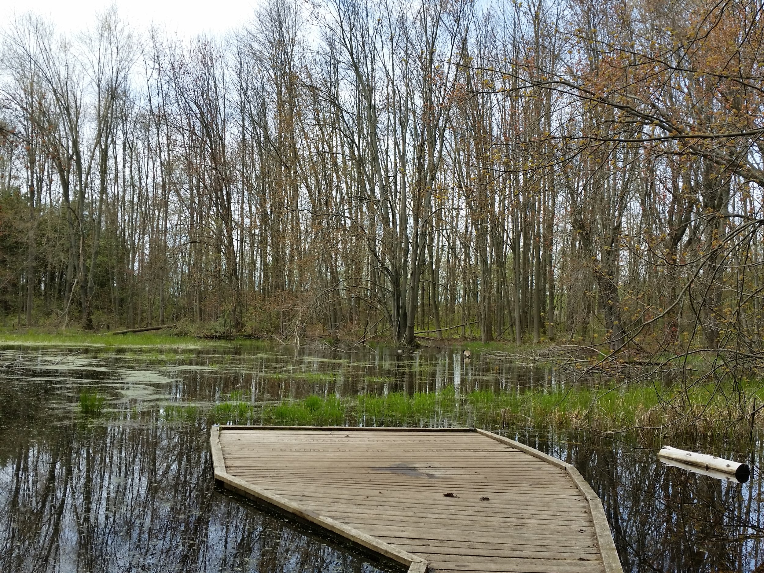 The peaceful duck marsh.