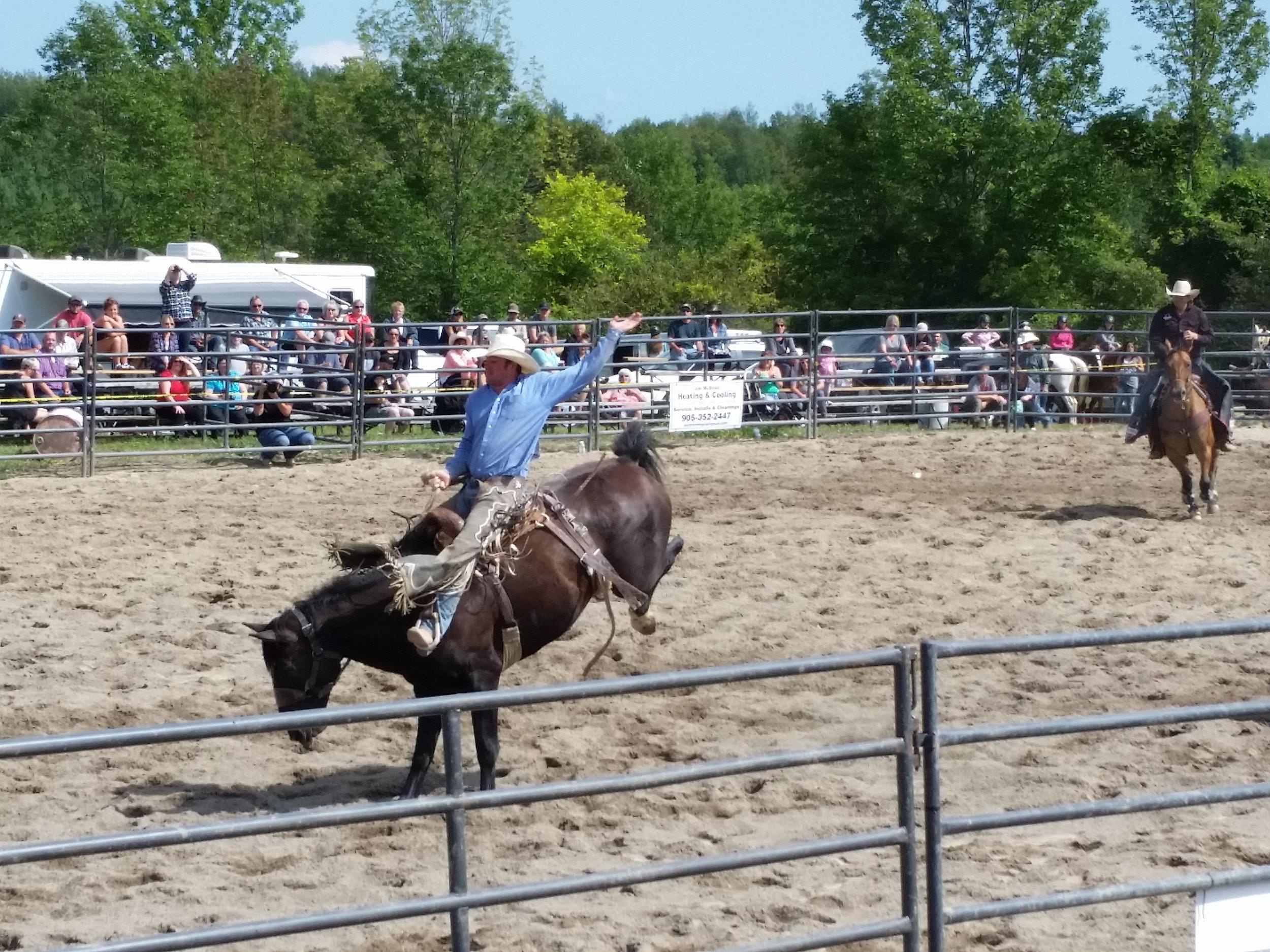 Bucking horses.