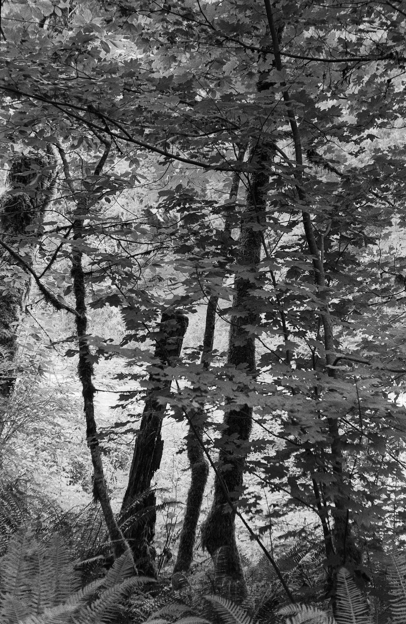 Untitled (71).jpg
