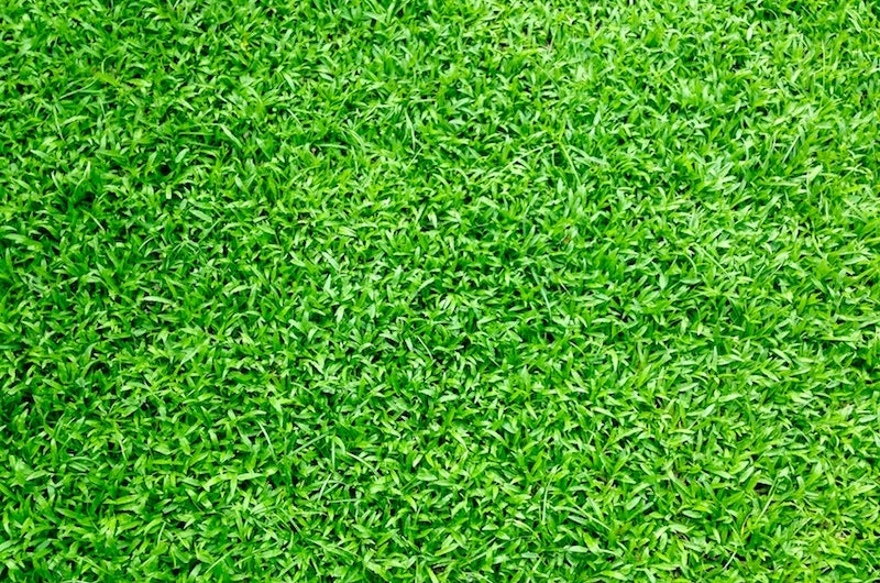 lush-lawn.jpg