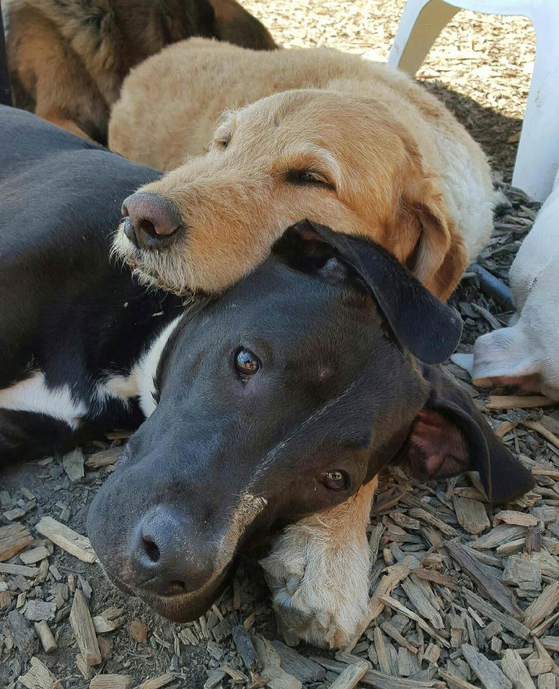 2016-dog-love-2_35521486121_o.jpg