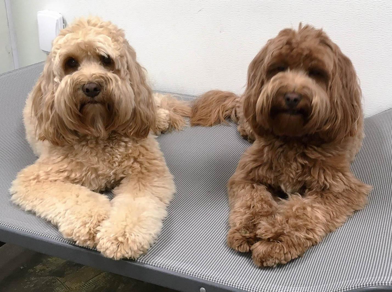 2016-dog-love-5_35521485901_o.jpg