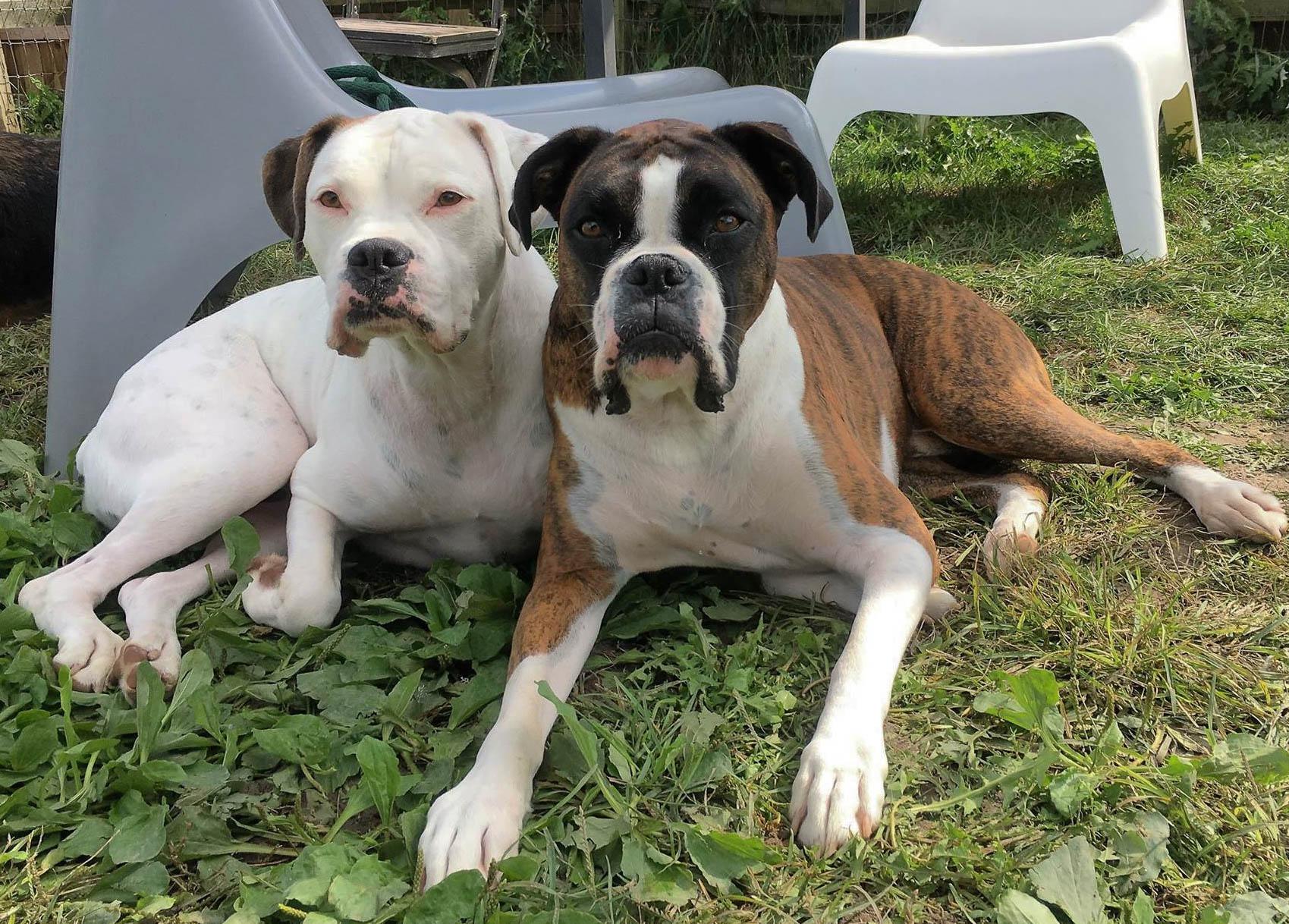 2016-dog-love-8_35521485291_o.jpg