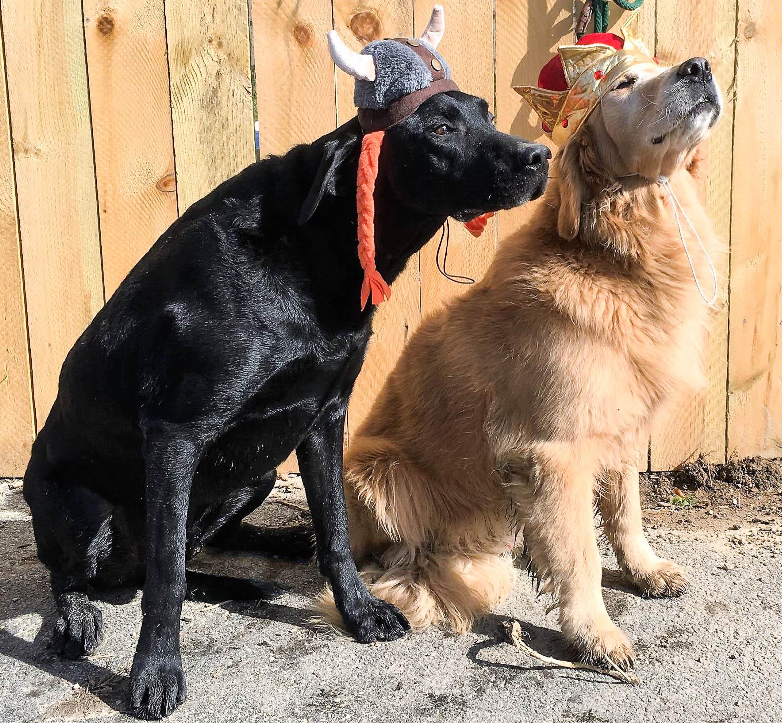 2016-dog-love-17_35264715340_o.jpg