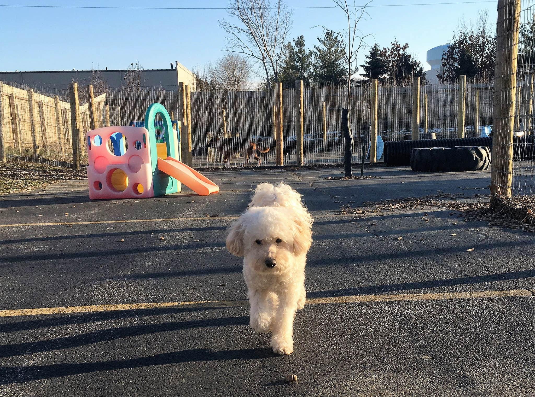 2016-dogs-4_35651500455_o.jpg