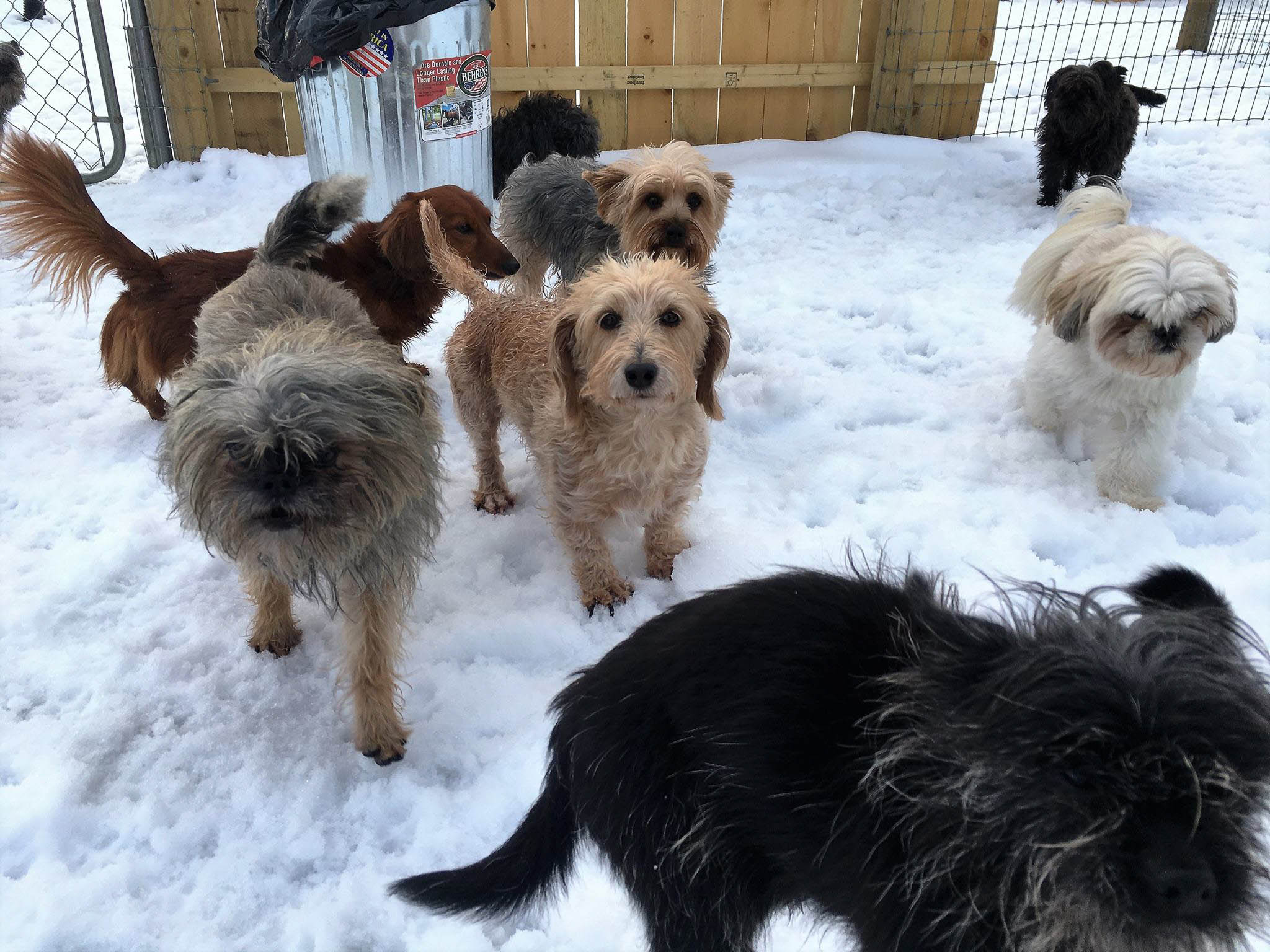 2016-dogs-12_35264354830_o.jpg