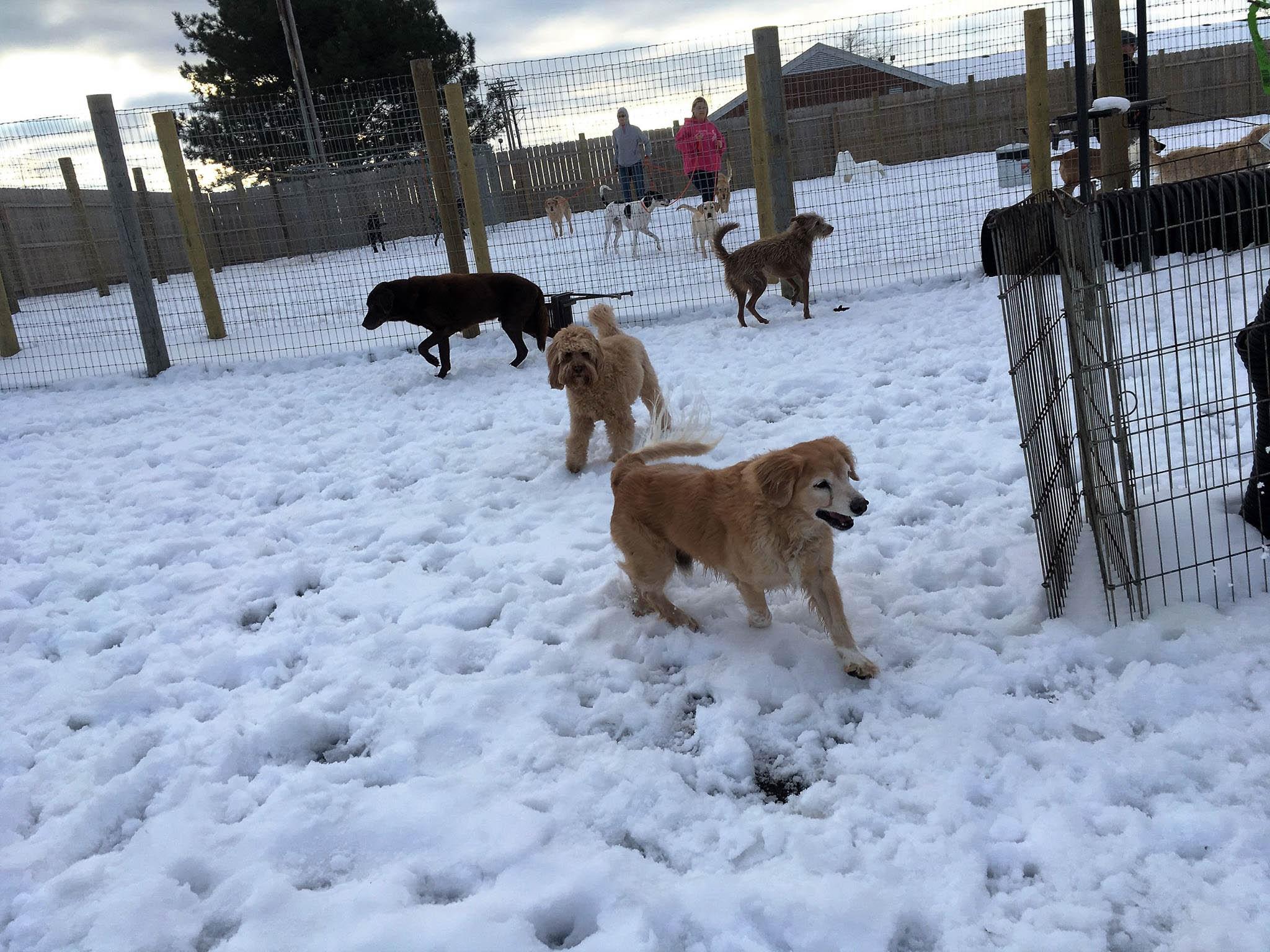 2016-dogs-11_35611851876_o.jpg