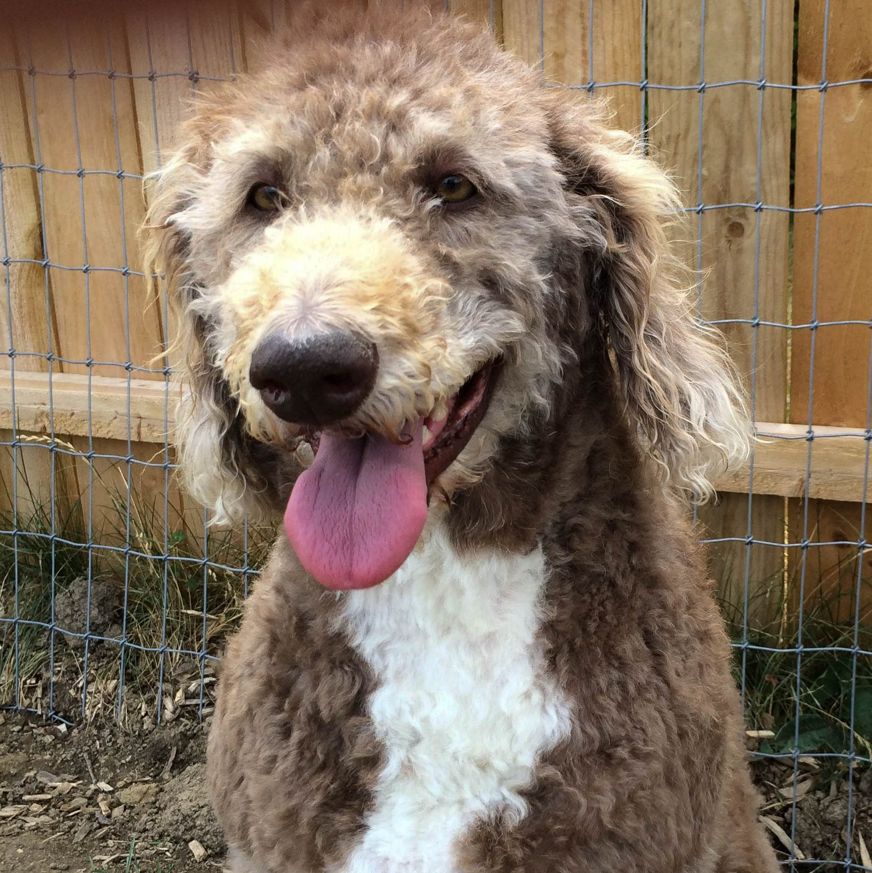 2016-dogs-19_34810365904_o.jpg