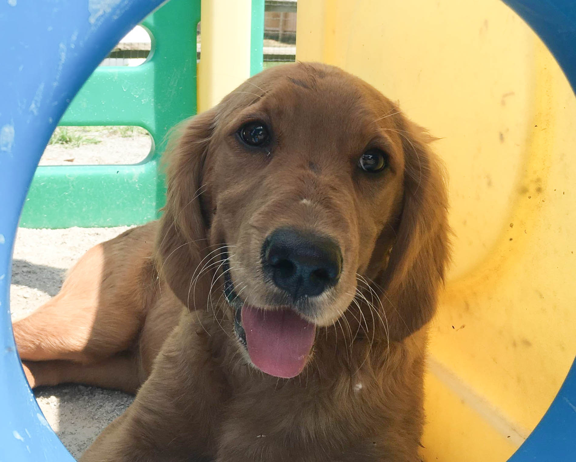 2016-dogs-26_35264353130_o.jpg