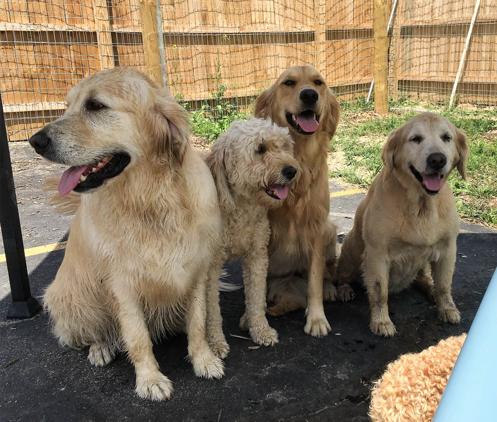 2016-dogs-25_35482670812_o.jpg
