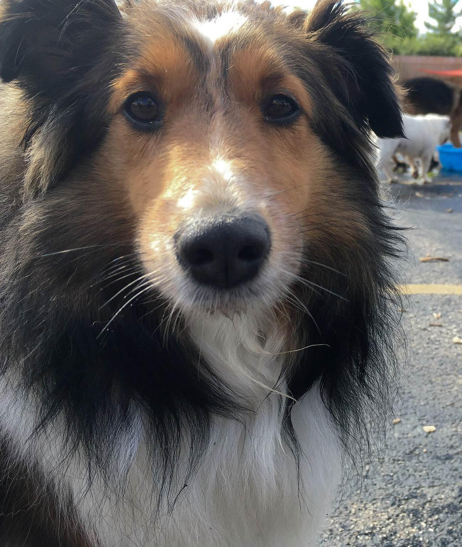 2016-dogs-29_35482666792_o.jpg