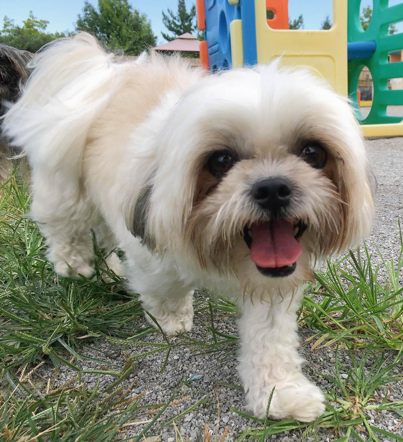 2016-dogs-31_35264352220_o.jpg