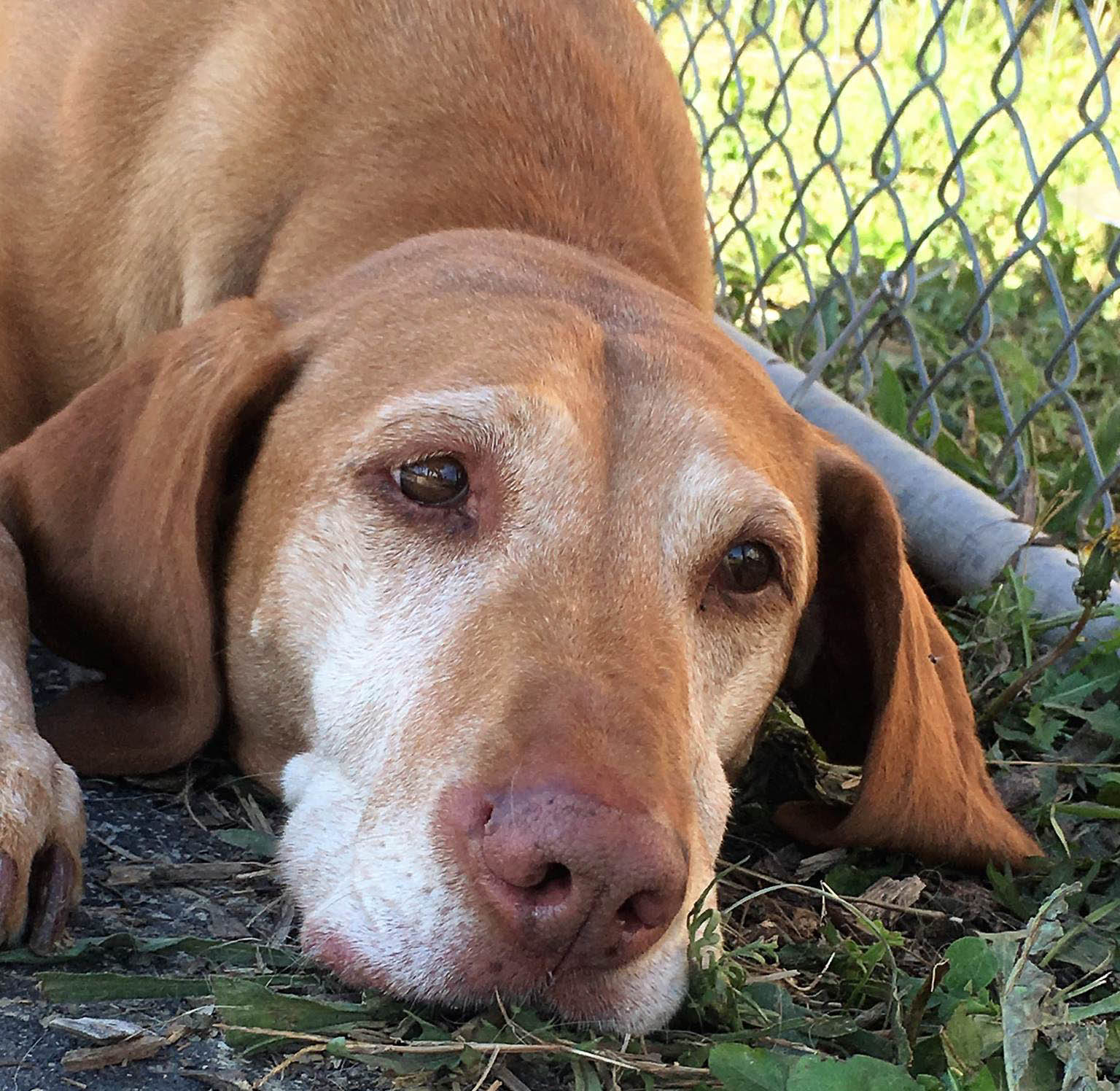2016-dogs-42_35611852466_o.jpg