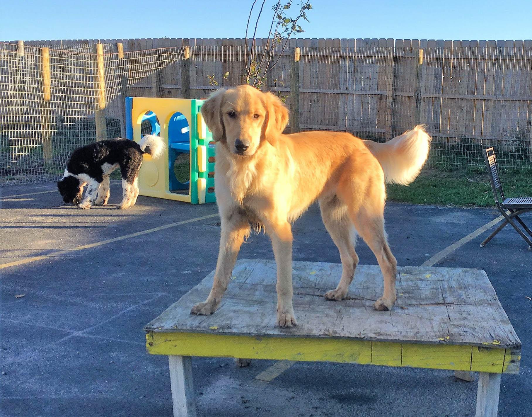 2016-dogs-46_35611852186_o.jpg