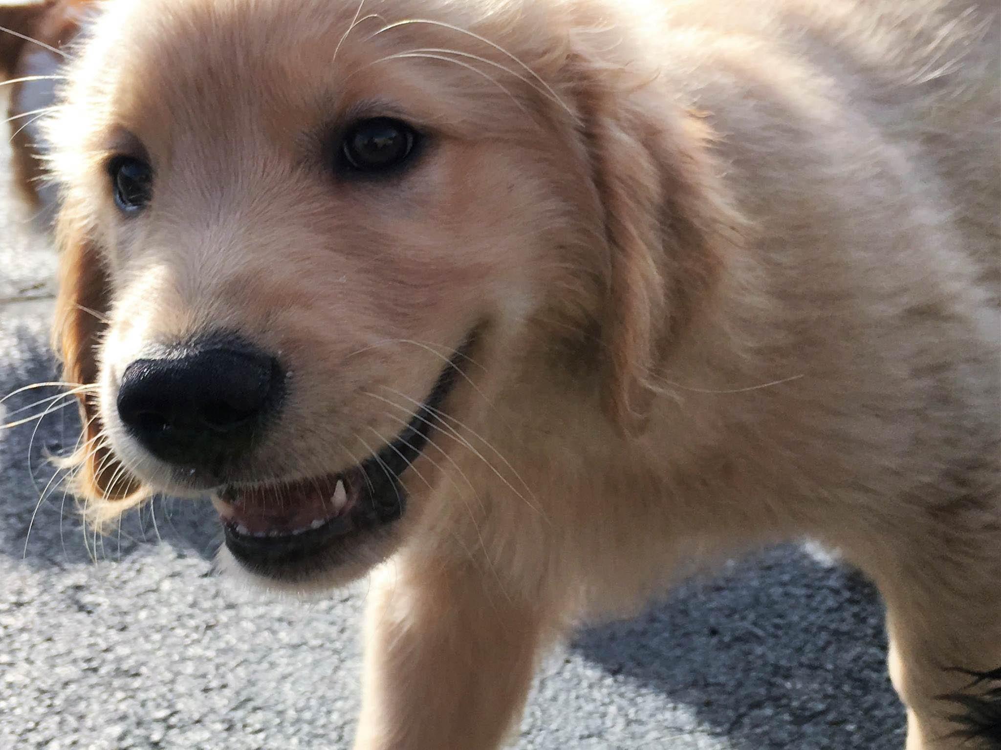 2016-dogs-47_35482667412_o.jpg