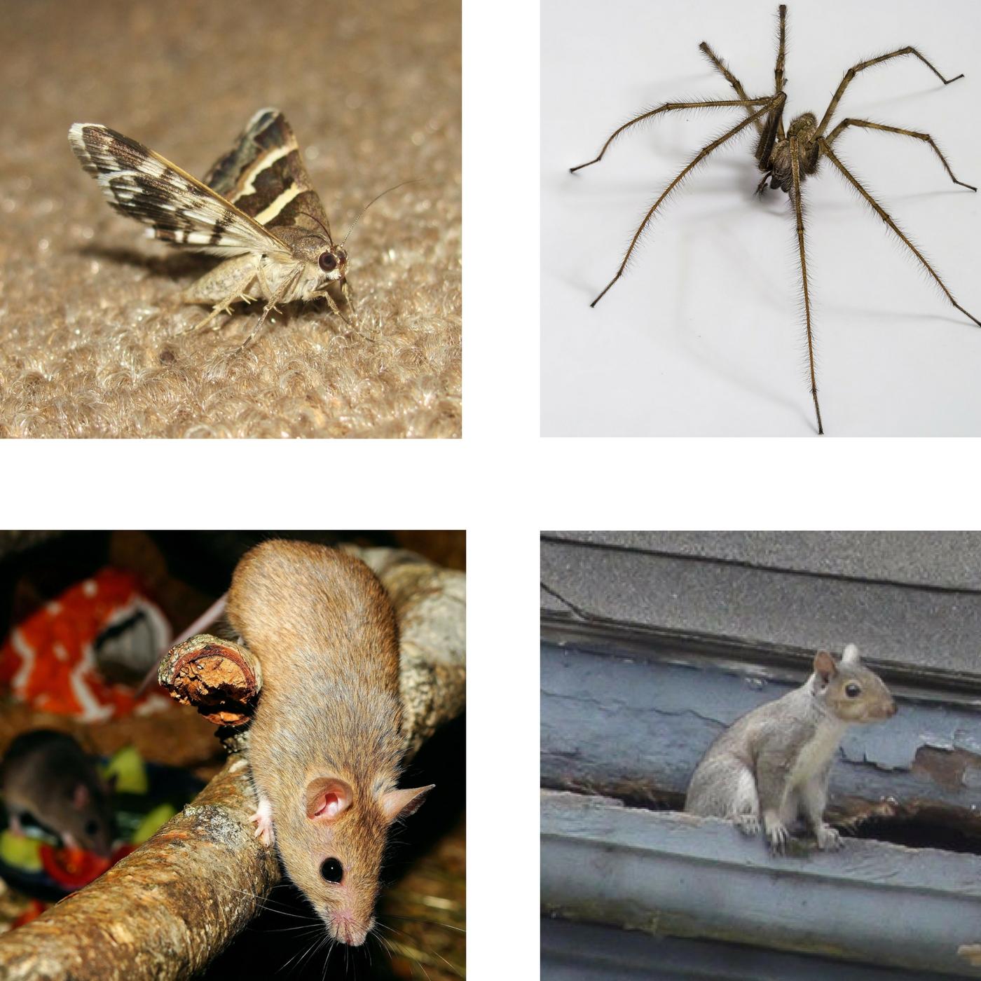 Autumn Pests.jpg
