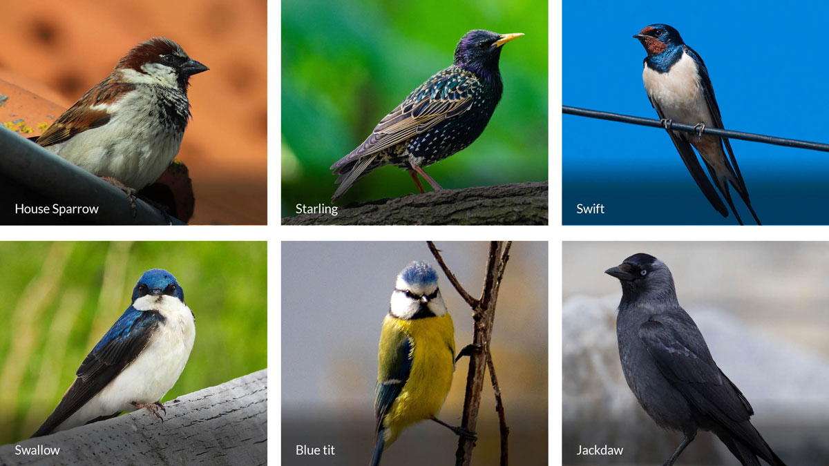 Typical-birds.jpg