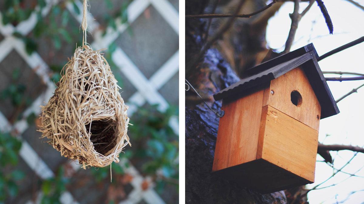 bird-nesting-options