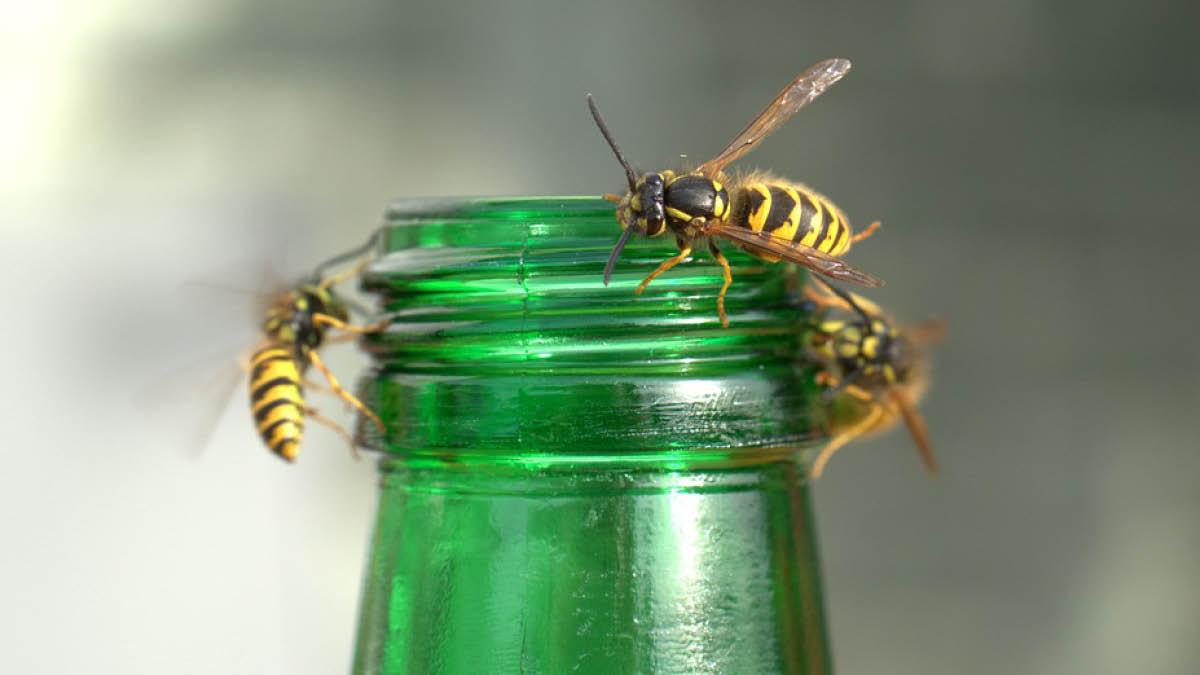 Summer pests.jpg