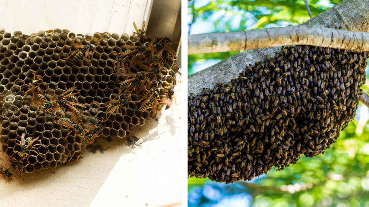 Wasp_Nest_Bee_Hive.jpg