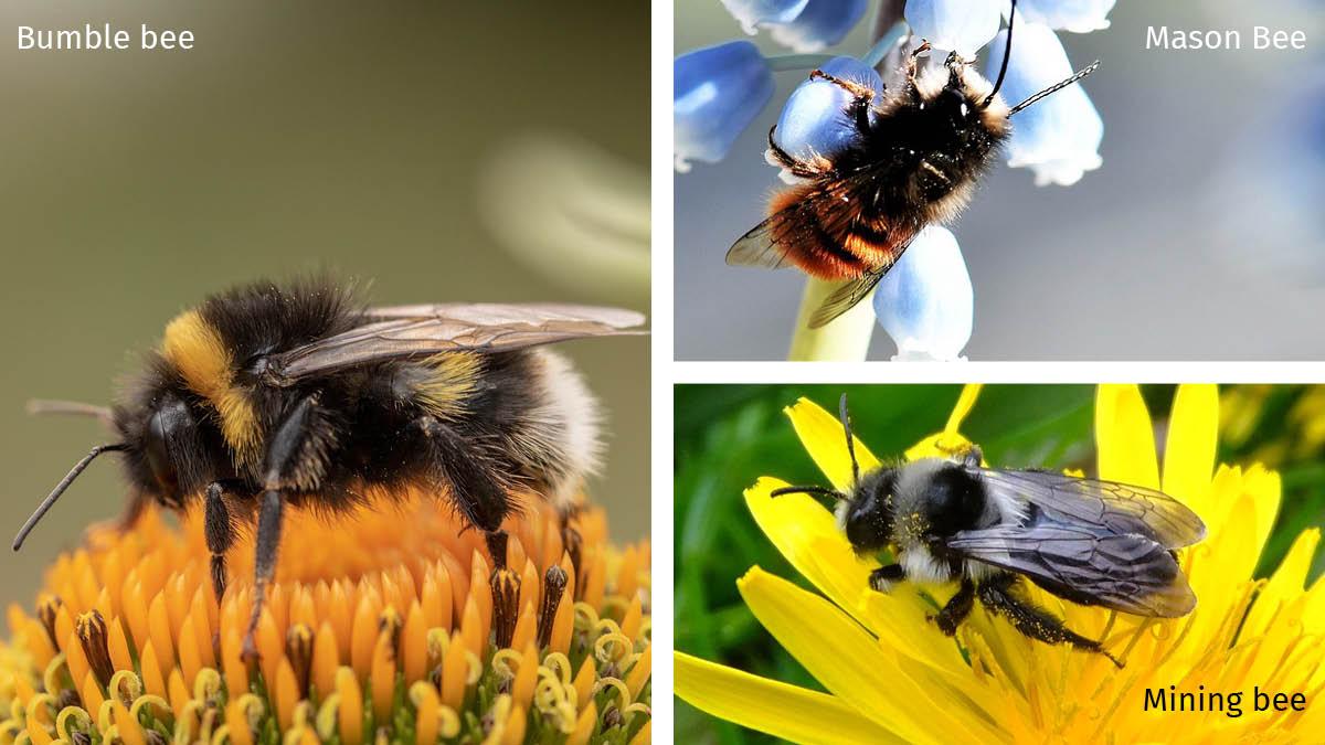 Bee types.jpg