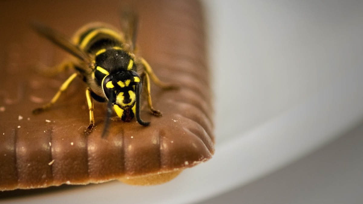 Wasps+in+your+home.jpg