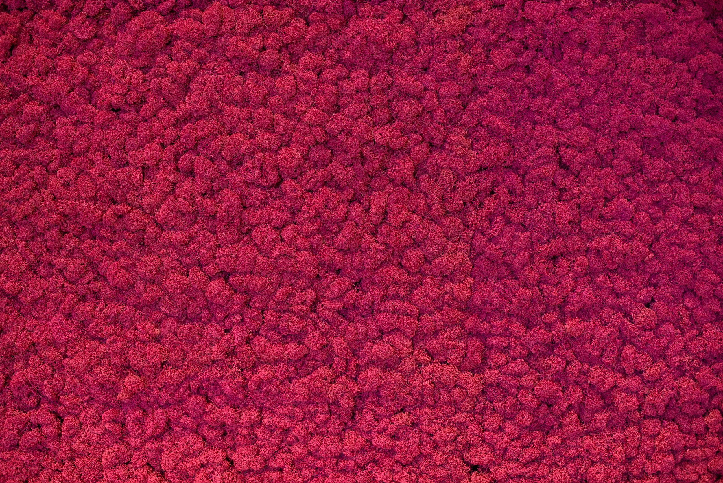 CBI Pink Wall.JPG