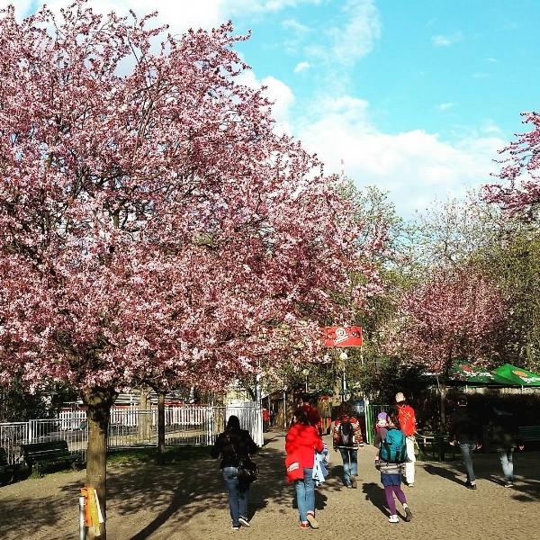 walking through reigrovy sady prague in spring