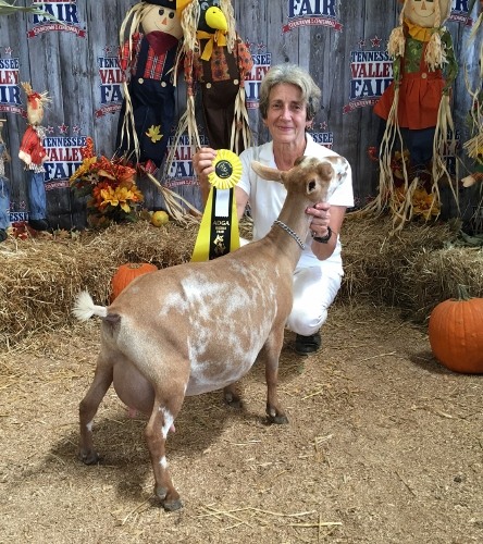 Reserve Grand Champion Junior Doe on May 31, 2014 at the SMDGA show in Knoxville, TN  Grand Champion Junior Doe at the MS State Fair 10/12/2014 (Leg #1)  Reserve Grand Senior Doe at the McCracken Co. Fair, Paducah, KY 6/25/2016 (ring 2)  Reserve Grand Senior Doe at the TVA&I Fair 9/17/2017 - But she won an unrestricted leg because she was reserve behind a finished champion doe CH Buttin'Heads Bolivian Tipoli (Leg #2)  2015 Bronze JuJu award from ANDDA  2016 Silver JuJu Award from ANDDA  2017 Silver JuJu Award from ANDDA