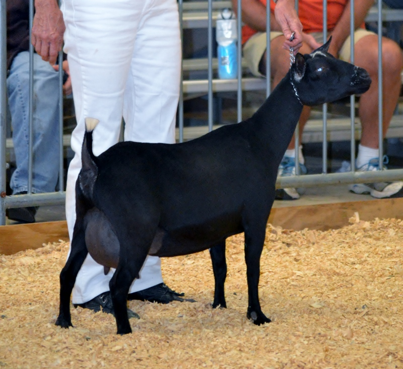 Belladonna at the 2014 GA National Show