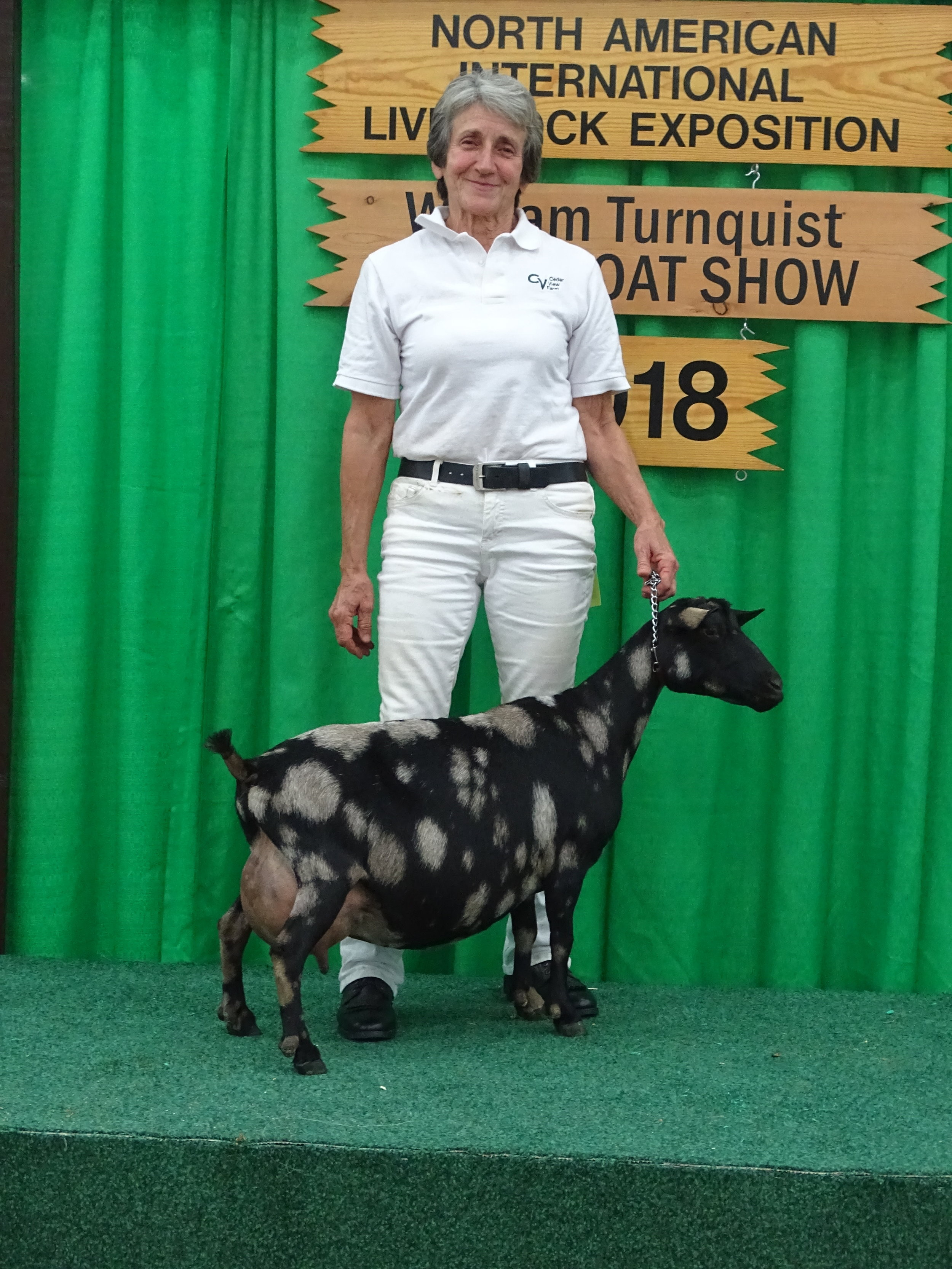 2018 was the third year for Isabella to win Grand Champion Senior Doe at NAILE. She was also part of the first place Dairy Herd and first place Senior group of Three.