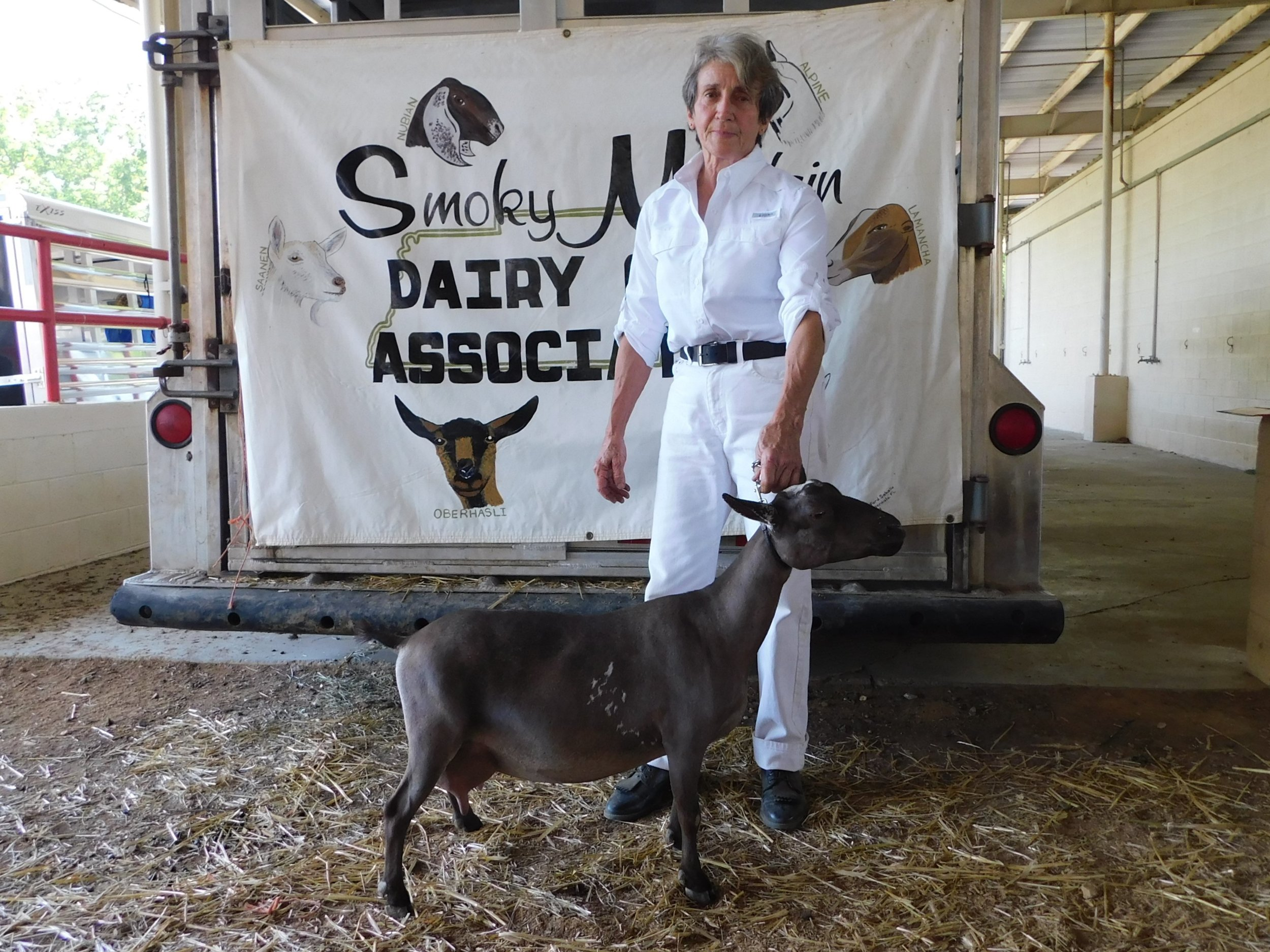 Yadira won two Grands (Ring 2 and 3) at the Smokey Mt. Dairy Goat Association show on May 18, 2019.  Her final leg was won at the May Spring Fling in Lebanon, when she came in Reserve to a doe who was already a Finished Champion.