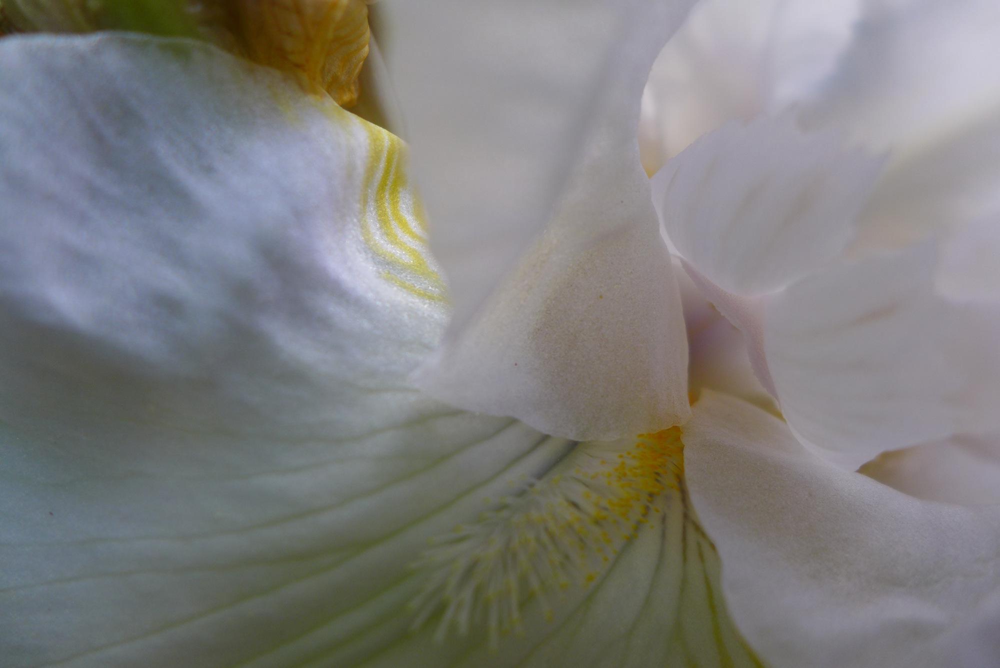 Nancy Hoopes, Fine Art Photography-002.jpg