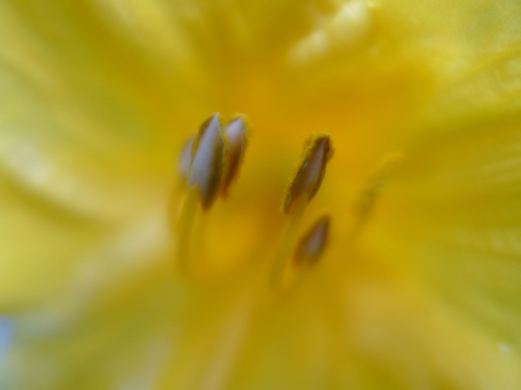 Nancy Hoopes, Fine Art Photography-018.jpg