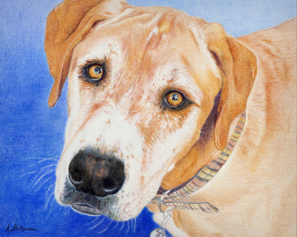 Andreas Stutesman, Colored Pencil, Dog Paintings-004.jpg